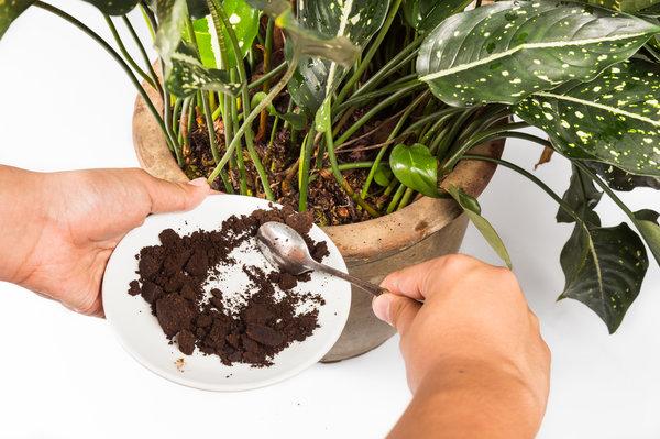کاربردهای غیر خوراکی قهوه